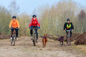 Mushing en bicicleta