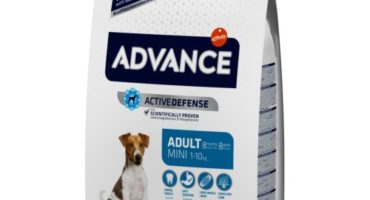 Advance mini adult perro