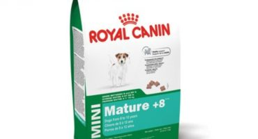 Pienso Royal Canin Mini Mature 8