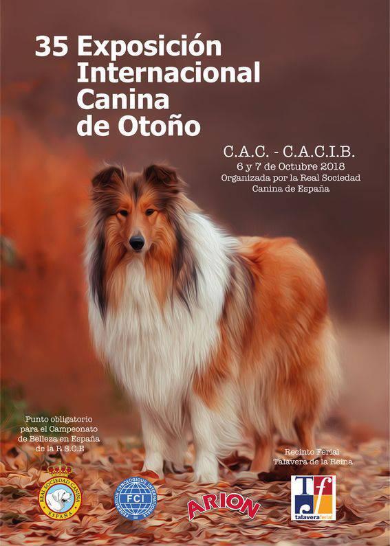 Exposicion canina Talavera de la Reina 2018