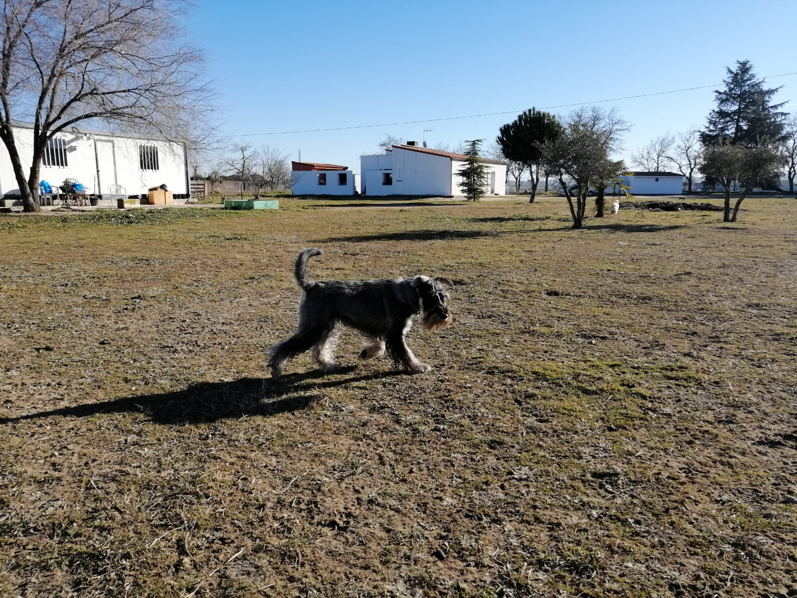 residencia canina larga estancia madrid
